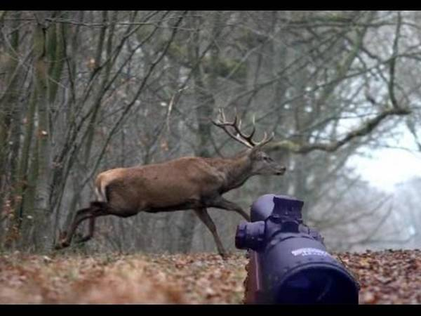 Opex chasse