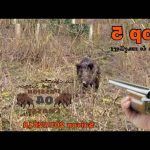 Avis: PROTO chasse | Avis & prix 2020