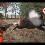 Code AMZ: Rubber Ball chasse | Qualité Prix 2020