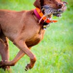 Comparer: ProHunt chasseur | Test & avis 2020